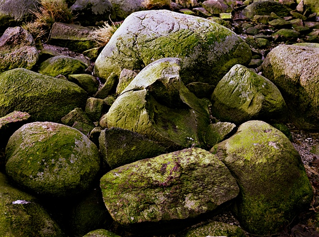 Shawn Bitters Photography Denmark Hirsholm stones ancestry Danish Council of Artists