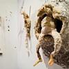 Creatures, NYU Thesis Show