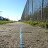 Blue Line, Pink Line