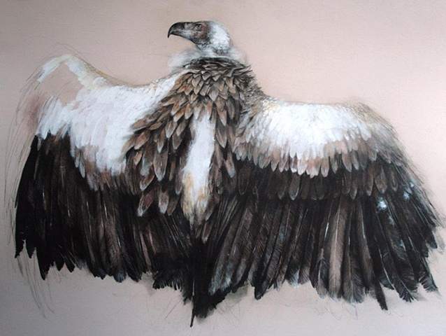 vulture, contemporary drawing, existential