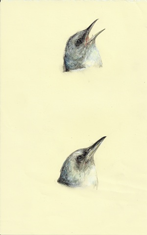two birds, contemporary drawing, realistic, realism