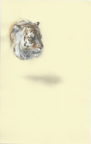 drawing, contemporary, realism, absurd, animal, tiger, minimal