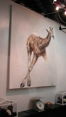 giraffe drawing, giraffe painting, animal art, cellar door chocolates, baby giraffe