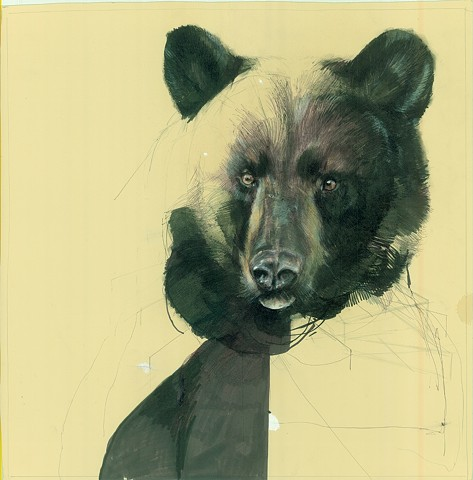 bear, animal art, nature, natural history art, studies, drawing, animal drawing