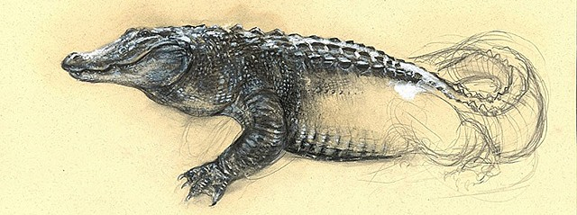 Alligator? for Jason Noble