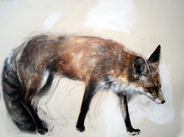 fox, cpntemporary drawing, anti-narrative, magical realism