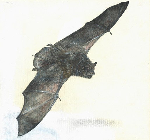 bat, drawing, contemporary realism, nature drawing, contemporary drawing