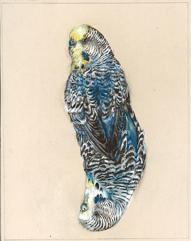 drawing, birds, surreal, detailed