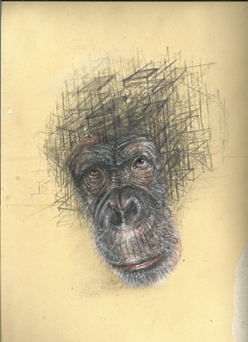 chimp, chimpanzee, contemporary animal art, drawing, unconventional drawing media