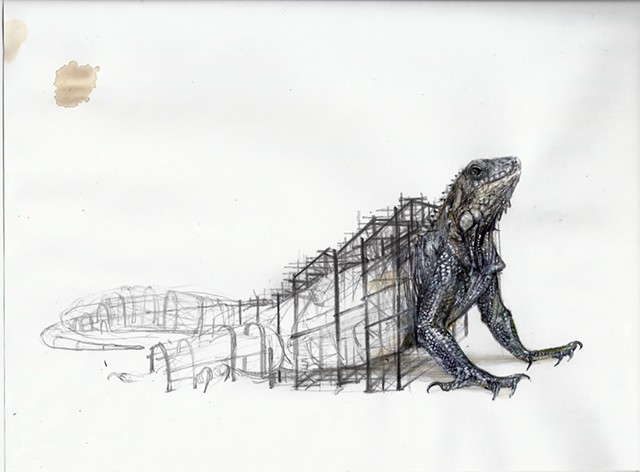 lizard, reptile, contemporary animal art, drawing, new drawing
