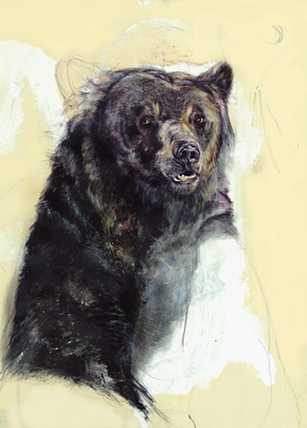 bear, drawing, contemporary, realism, nature, existential