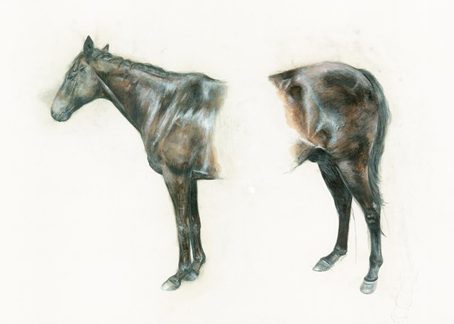 horse, drawing, contemporary realism, kentucky horses, equine art, contemporary drawing