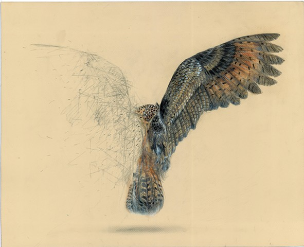 owl, drawing, sketching, traditional, architecture, old master, animal art