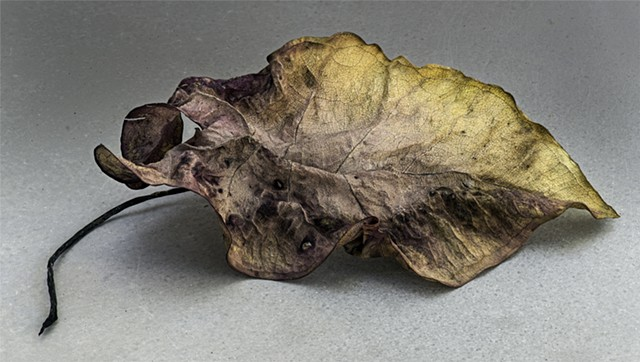 macro focus stacked,panorama of dead leaf.  A  detailed nature study.