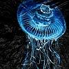 Bell Jellyfish II