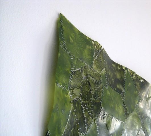 Chlorella (detail of top corner)