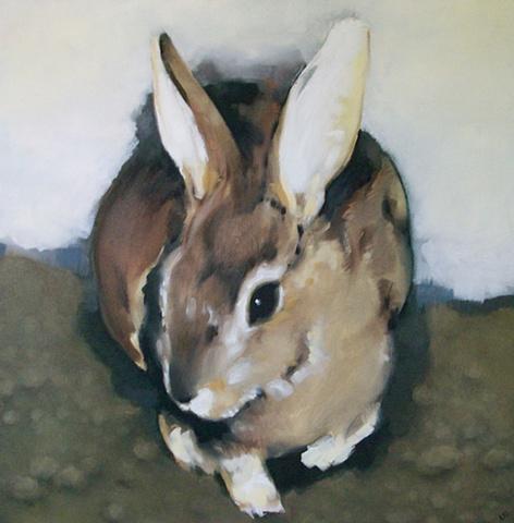 rabbit in the snow