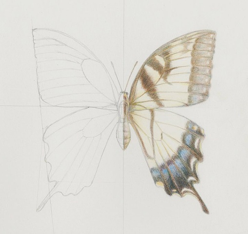 Butterfly study