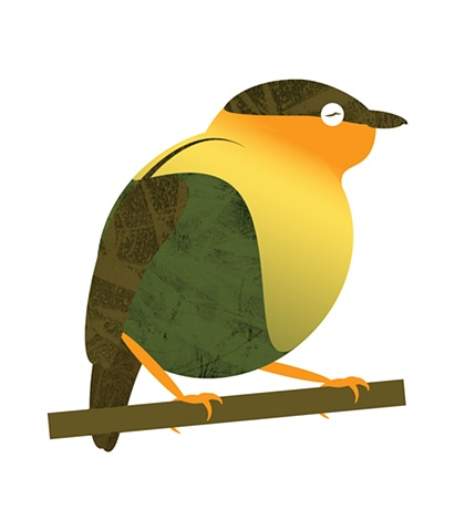 Orange-Collared Manakin