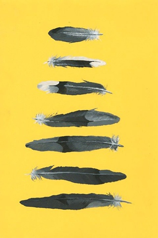 Mockingbird Feathers
