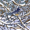 Winter Jay