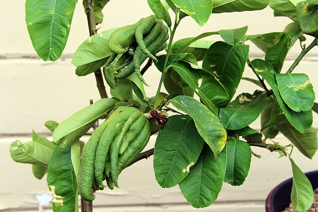 New Painted Pots