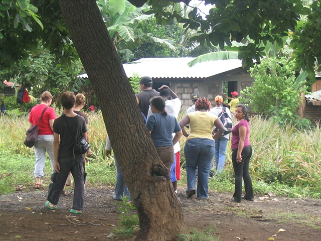 Walk through the Pineapple Cooperative