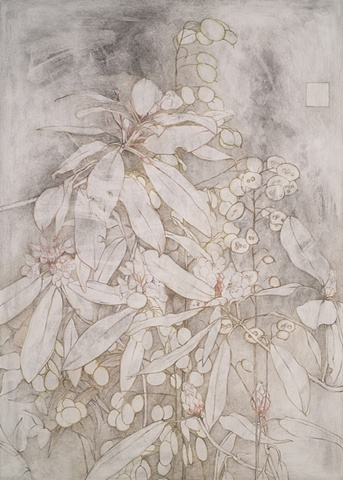 Rhododendron and Lunaria (Honesty)