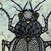 Love Bug II