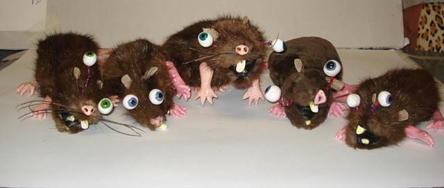 Rats Rats Rats