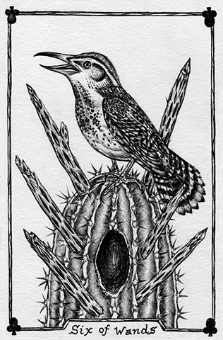 gray tarot, dark tarot, animal tarot, Cactus wren, leta gray