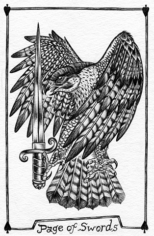 page of swords, valet of swords, gray tarot, peregrine falcon, sword, birds, nature tarot
