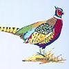 """Pheasant"""