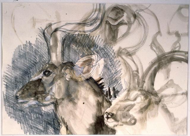 Kudu Head and Horns: Brookfield Zoo