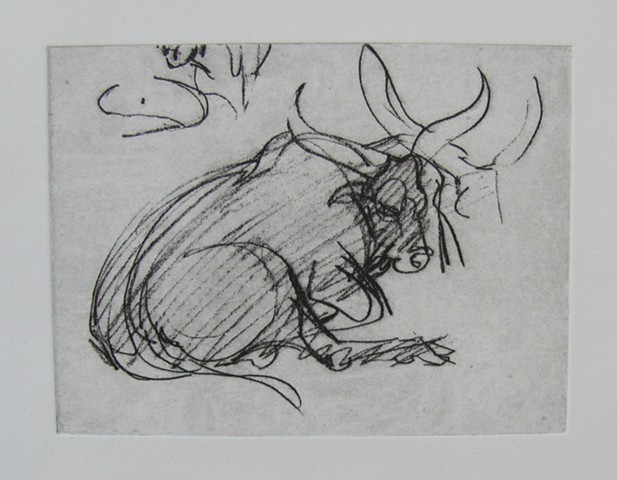 Bull Study # 2