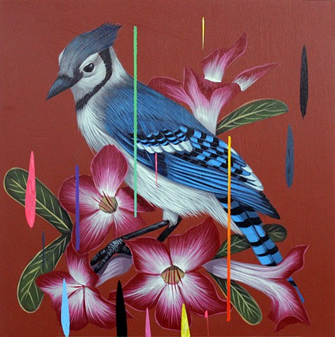 Blue Jay and Desert Rose