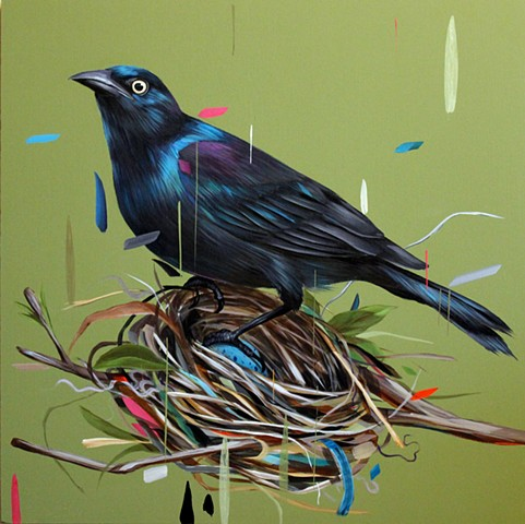 Grackle and Nest
