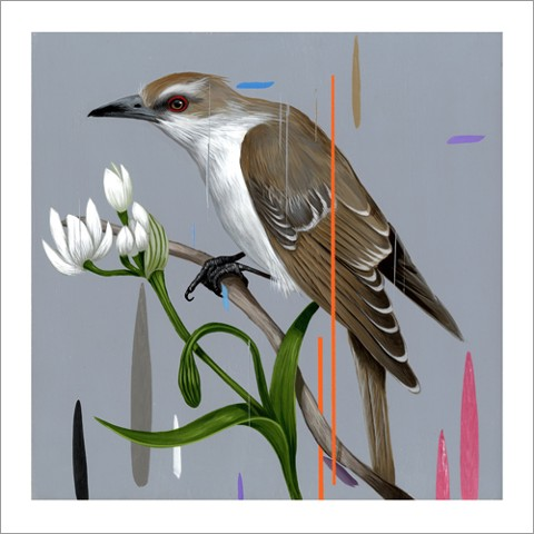 BLACK BILLED CUCKOO PRINT