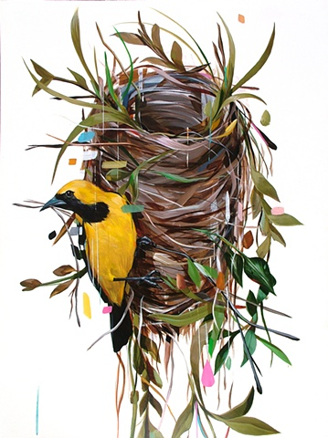 oriole and nest