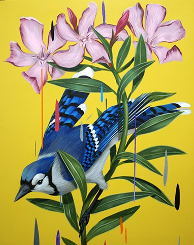 Blue Jay and Oleanders