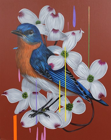 Easter Bluebird and Dogwoods