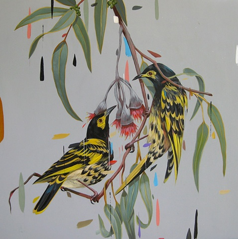 regent honeyeaters