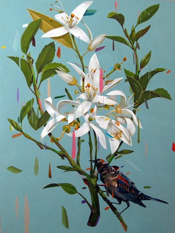 orange blossoms and black birds