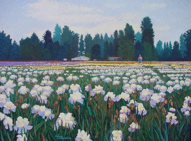 A field of Iris in full bloom near Salem, OR