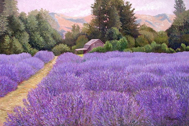 A view of a Lavender Farm in Hood River, OR