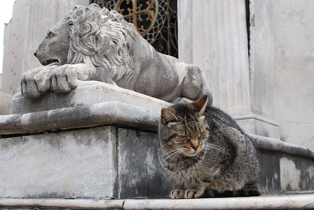 Untitled (Recoleta cat with statue)