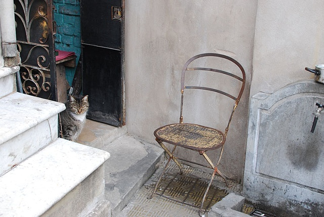 Untitled (Recoleta cat with chair)