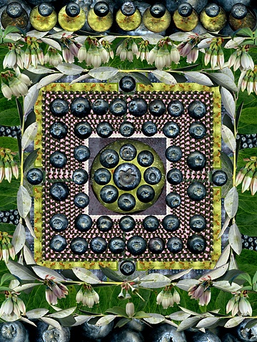 blueberry blueberries mandala healing medicine flowers blue white green leaves fruit slices
