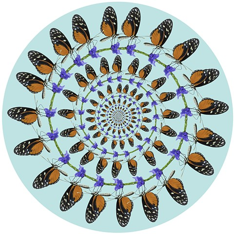 hecale longing butterfly circles purple orange black white art by muffin sacred geometry
