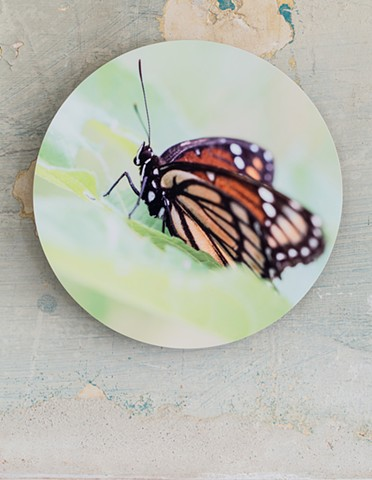 monarch green butterfly art by muffin